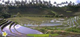 Rijstvelden van Bali