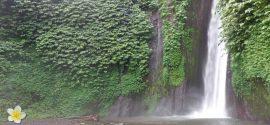 Jungle met waterval