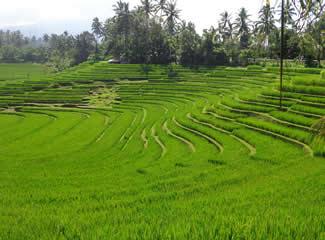 Dagtrips 5: Rijstveldwandeling en schoolbezoek