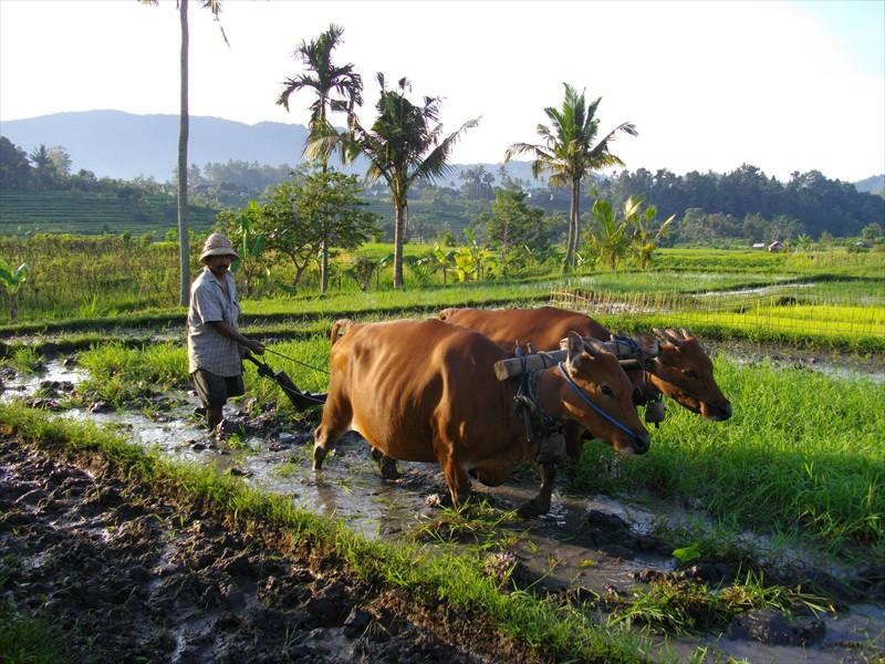 Sidemen farmer